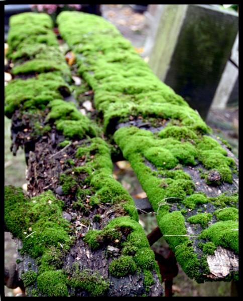 Święto Zmarłych, 01.11.2009, Powązki Wojskowe
