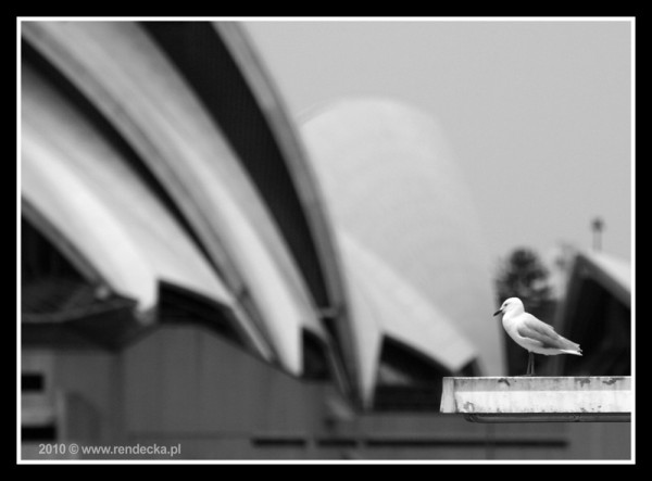 Pani Mewa wybiera się do Sydney Opera House / Mrs. Seagull is going to Opera House of Sydney